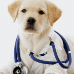 seguros para proteger a tus mascotas