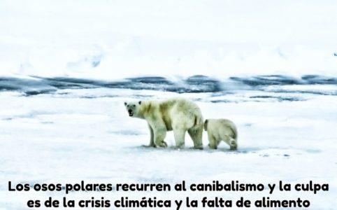 dos-osos-polares-andando-por-el-hielo-en-busca-de-comida-768x512