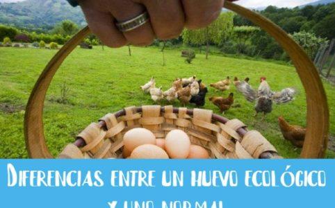 huevos-ecologicos-de-gallinas-libres