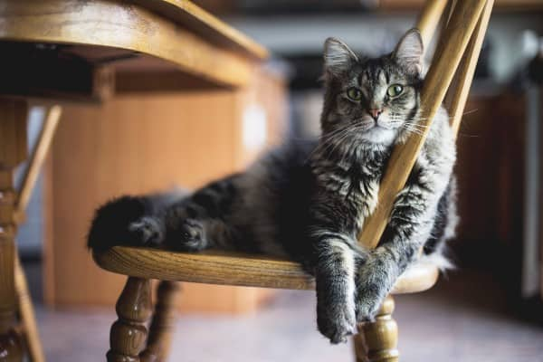 gato contento